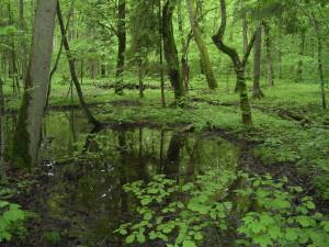 Polsko 2009 Bělověžský nár. park