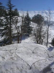 Libanon 2006 u  cedrů, cca 2300 m